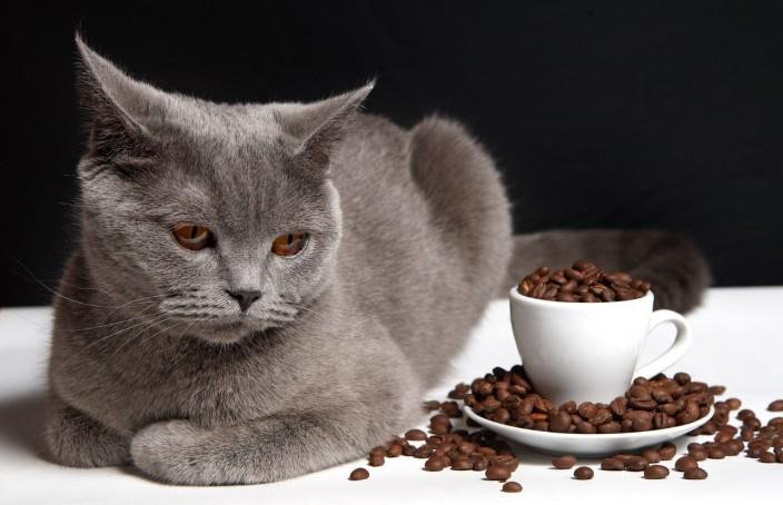 кофе и кошки